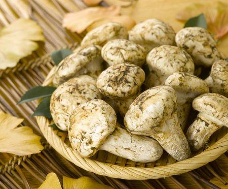 Mushroom on bamboo tray in autumn photo