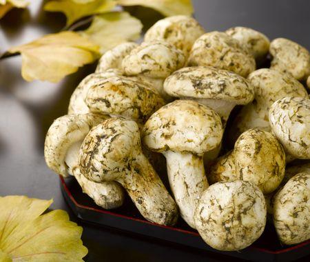 Mushroom on black tray in autumn photo