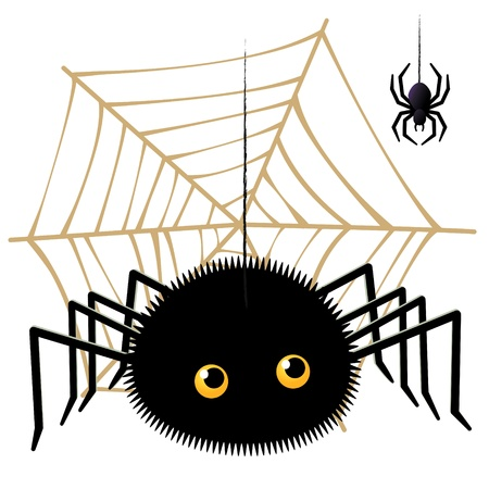 Vector illustration of Cartoon spider looking up a tarantula on  cobweb Vector