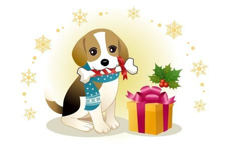dog gift: Beagle dog biting ribboned bone with christmas present box
