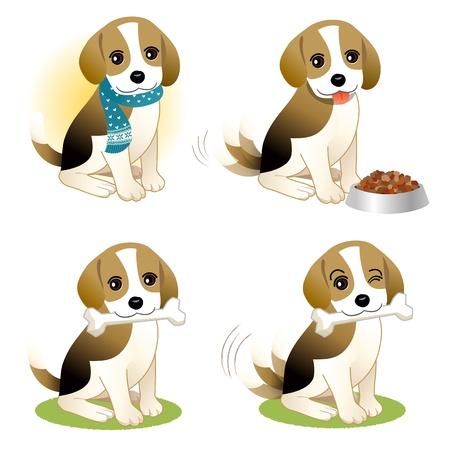 dog bite: Set di cucciolo di Beagle - con l'osso, indossando la sciarpa a maglia, e con cibo per cani in una ciotola