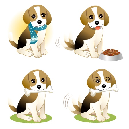 Set of Beagle puppy - with bone, wearing knitted scarf, and with dog food in bowl  Vector