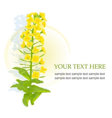 Illustratie van rapaseed bloem met een kopie ruimte