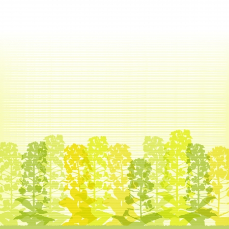 canola: Rape blossom silhouettes on lined background  Spring Time  File contains Clipping mask and Transparency