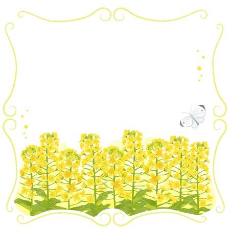 abloom: Tallo marco con canola flores y una mariposa blanca archivo contiene la m�scara de recorte y Transparencia Vectores