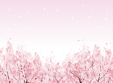 Beautiful Cherry blossom trees in bloom. File contains Clipping mask, Gradients. Illustration