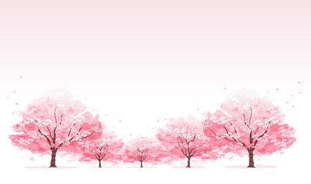 arbol de cerezo: L�nea de los cerezos en flor de fondo de �rboles