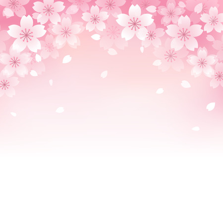 text pink: Beautiful Pink Cherry blossom background.  Illustration