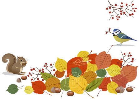 red squirrel: Autumn scenes- golden leaves, acorns with blur bird and squirrel Illustration
