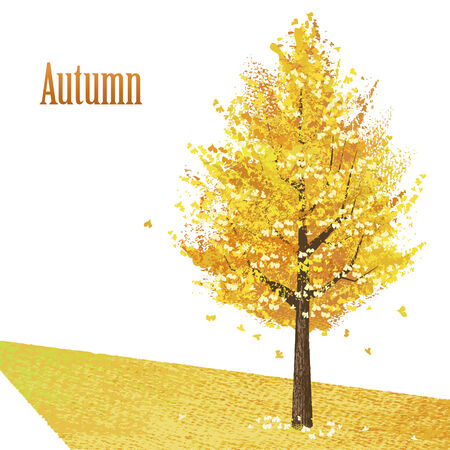 Golden leaves on Gingko tree in late Autumn.   Vector