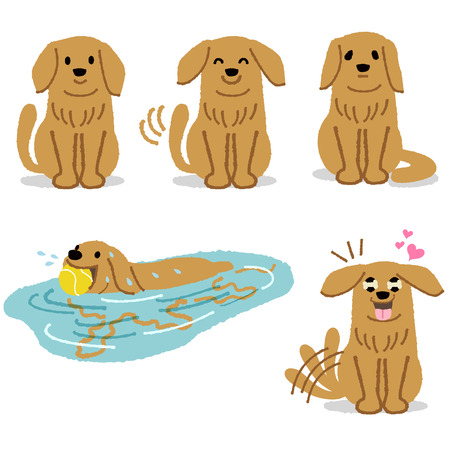 dogs: Expression of adorable golden retriever - smiling, wagging, feeling lonely, happily swimming, and exciting to wait something.