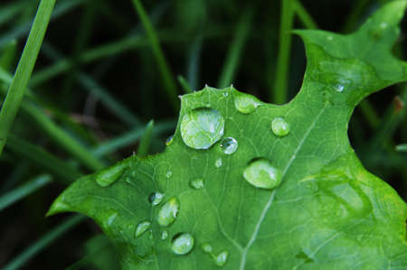 Water droplets on the green leaf  against close up shot photo