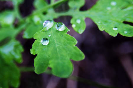 Water droplets on the green leaf  against close up shot Stock Photo - 20906188