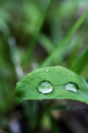 Close-up shot of Rain droplets on the green leaf  photo