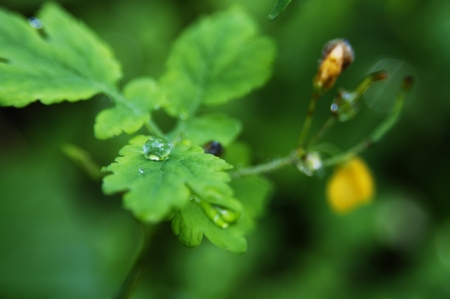 Close-up shot of rain droplets on the green leaf