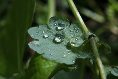 Rain droplets receiving the lighting on the green leaf