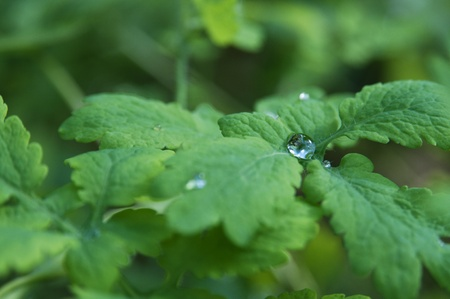 Close-up of rain droplets on the green leaf