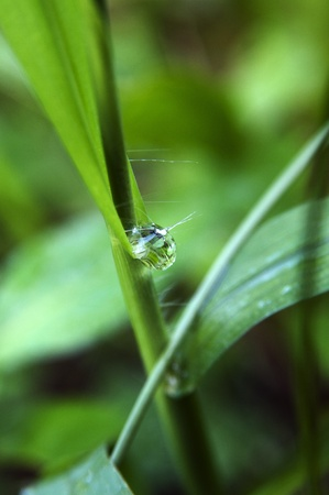 The rain droplets hanging over a stem of green plant photo