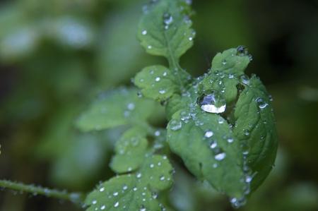 Close-up shot of rain droplets on the leaf