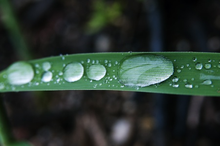 Close-up shot of rain droplets on the leaf of reed Stock Photo