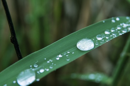Close-up shot of rain drops on the leaf of reed