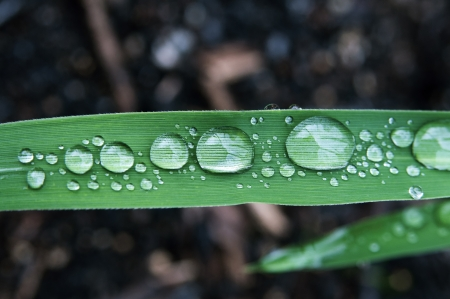 Close-up shot of rain droplets on the leaf of reed 写真素材