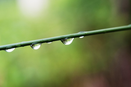 Rain drops hanging below the branches of reed