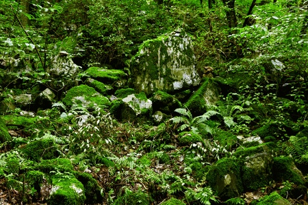 Rocks covered by green moss in the mountain photo