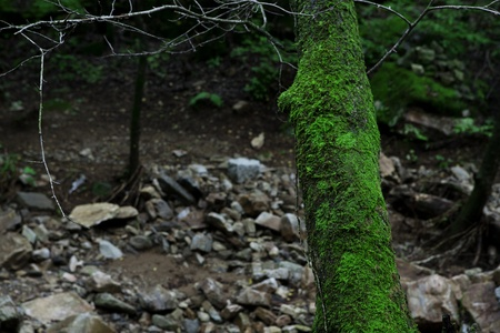 Moss covered tree in the mountain valley photo