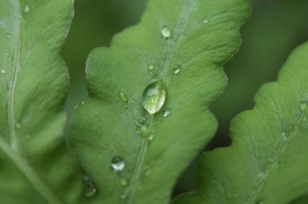 penetracion: Cierre de tiro de las gotas de lluvia sobre la hoja verde