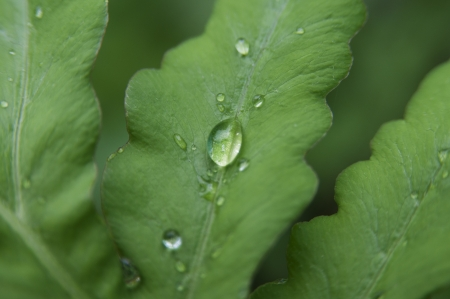 penetration: Close up shot of rain droplets on the green leaf Stock Photo