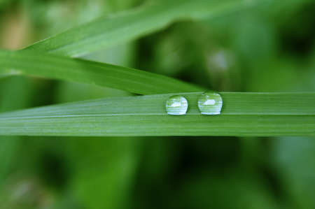 Close up shot of rain droplets on the green leaf 写真素材