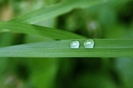 Close up shot of rain droplets on the green leaf Banque d'images