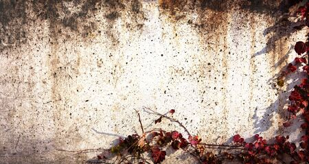 The ivy bound background with grunge effect include copy space Stock Photo - 23476556