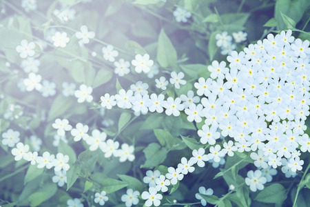low angles: Close up shot of wild flower bed Stock Photo
