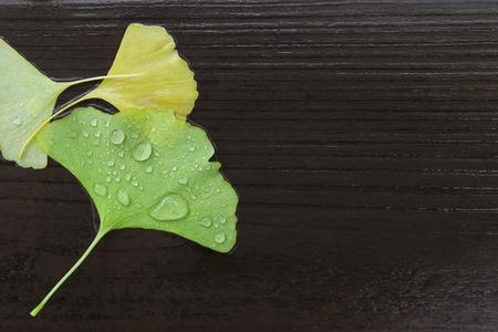 Ginkgo leaves on the wood floor 写真素材