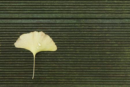 Ginkgo leaf on the wood floor 写真素材