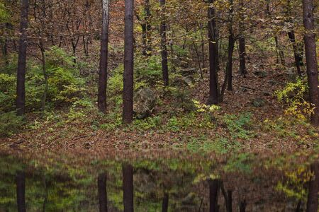Forest in the lake
