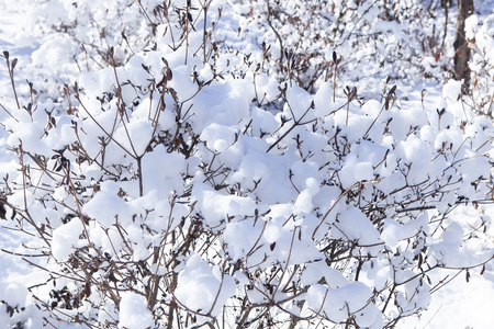 After snow, the snow piled up on the winter tree branches and the sky is shining brightly and clear.