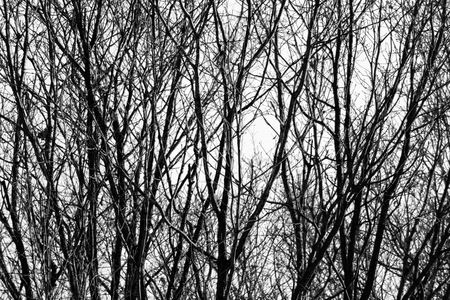 Winter tree branches standing in a mountain and apply the black and white photo