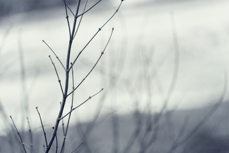 Winter tree branches puting out flower buds and apply the vintage effect 写真素材