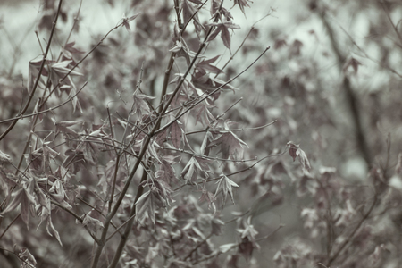 Winter tree branches are hanging by dried leaf and apply the vintage effect 写真素材