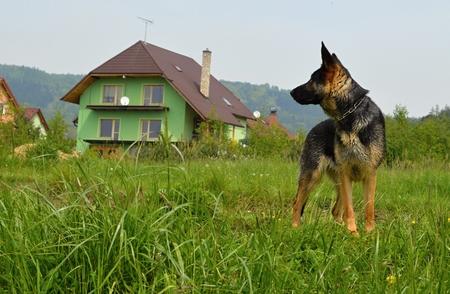 Posing dog Stock Photo