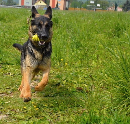 Jumping dog Stock Photo