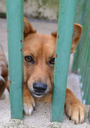 Dogs from shelters