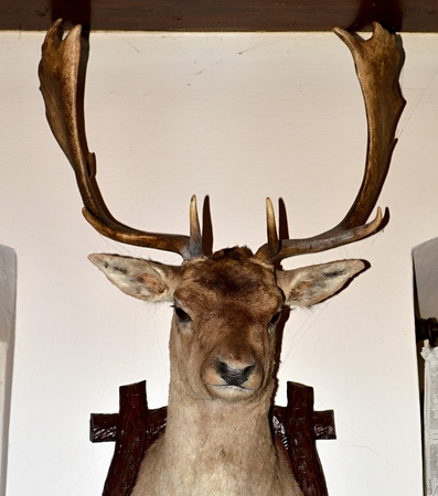 elk point: Hunting trophy Stock Photo