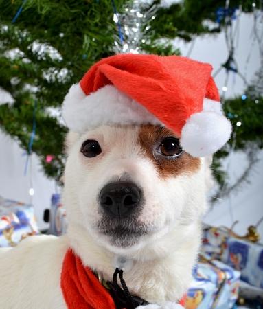 Christmas pet Stock Photo