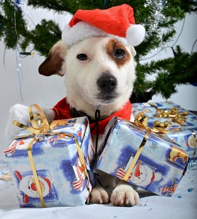 Christmas pet photo