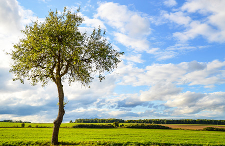 Deciduous tree standing alone on a meadow