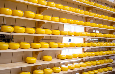 Cheese production in the countryside in Holland